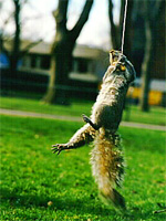 Squirrel Fishing