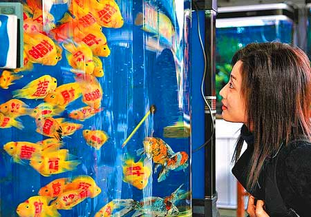 """In Wu Han China, people have been purchasing tattooed fish."