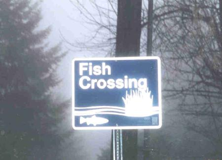 Fish crossing