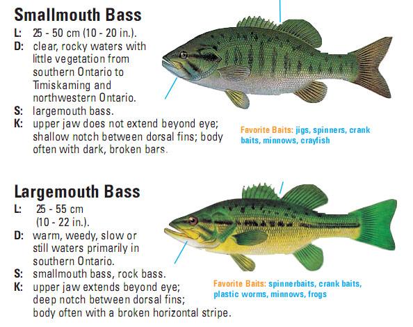 Amma woodworking ontario for Bass fishing season