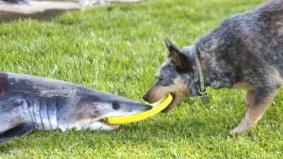 mako versus dog