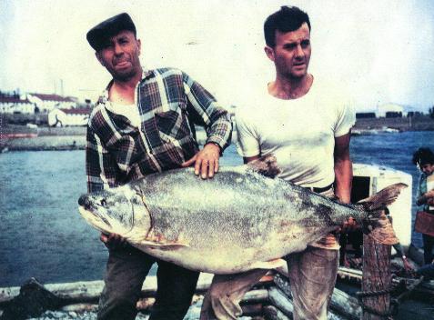 102lb lake trout