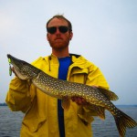 Average Northern Pike