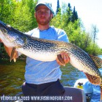 Huge Northern Pike