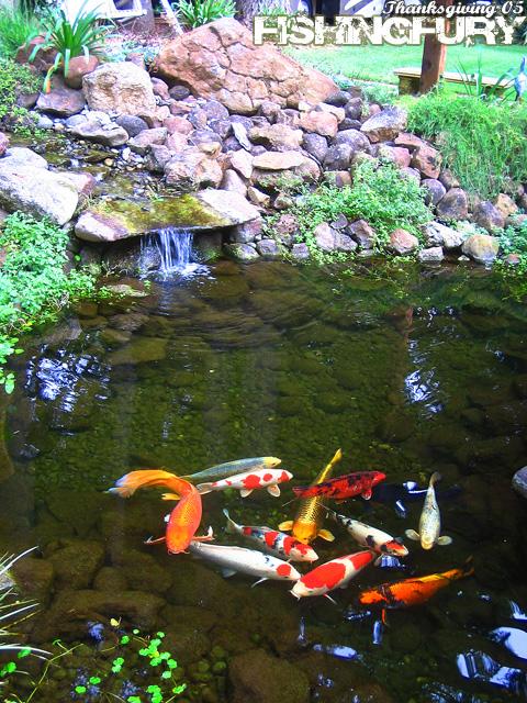 Thanksgiving 2005 fishing photo gallery fishing fury for Koi pool santa