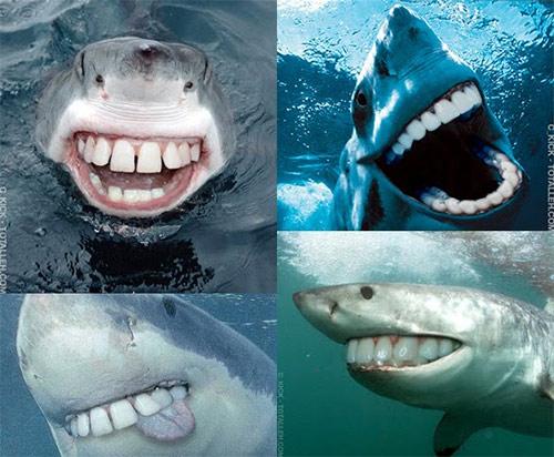 Sharks with human teeth - photo#15