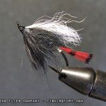 Red Tippet Torrish