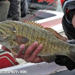 Niagara River Smallmouth