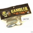 Gambler Cane Toad