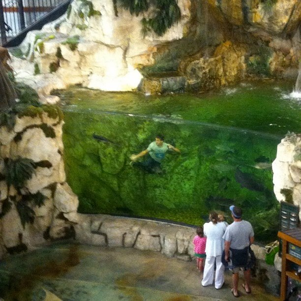 Do not swim at Bass Pro Shops