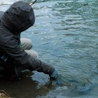 Dave releasing a fresh steelhead